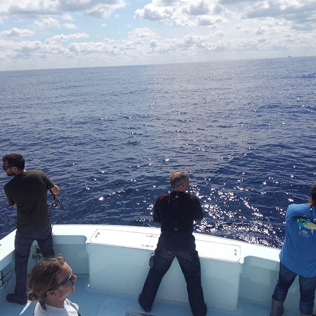 view of anglers casting for bluefin tuna