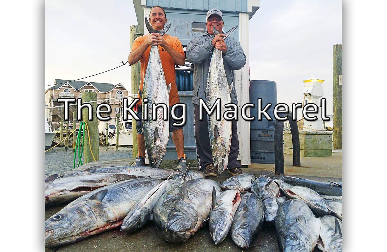 Cape Hatteras fishing charter displaying their catch of King Mackerel