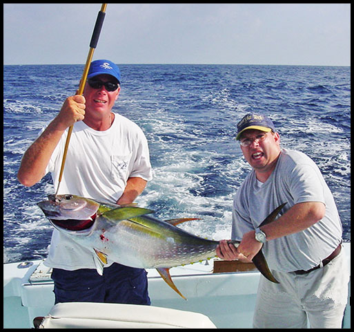 mate boats a yellowfin tuna as angler helps