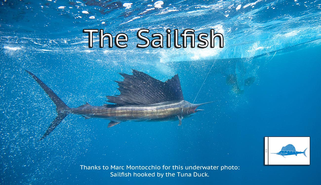 underwater photo taken by Marc Montocchio of a sailfish hookled by the Tuna Duck