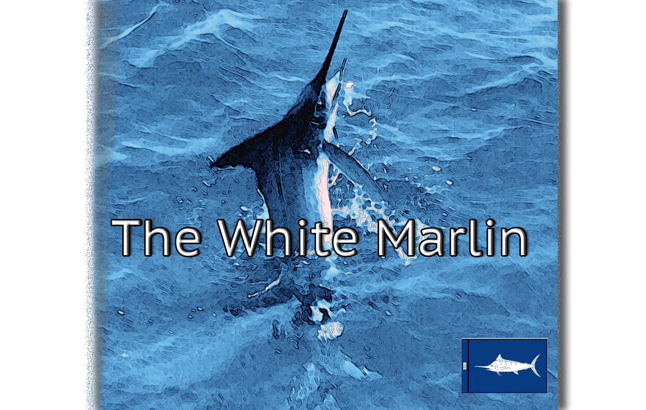 stylized iimage of a white marlin jumping